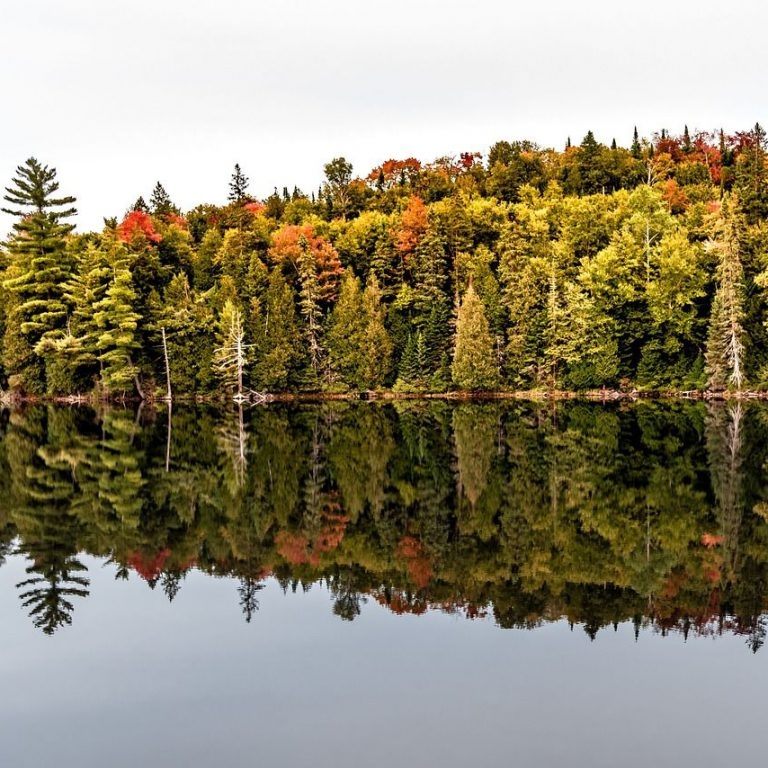 Scenic fall lake view with forests in the background